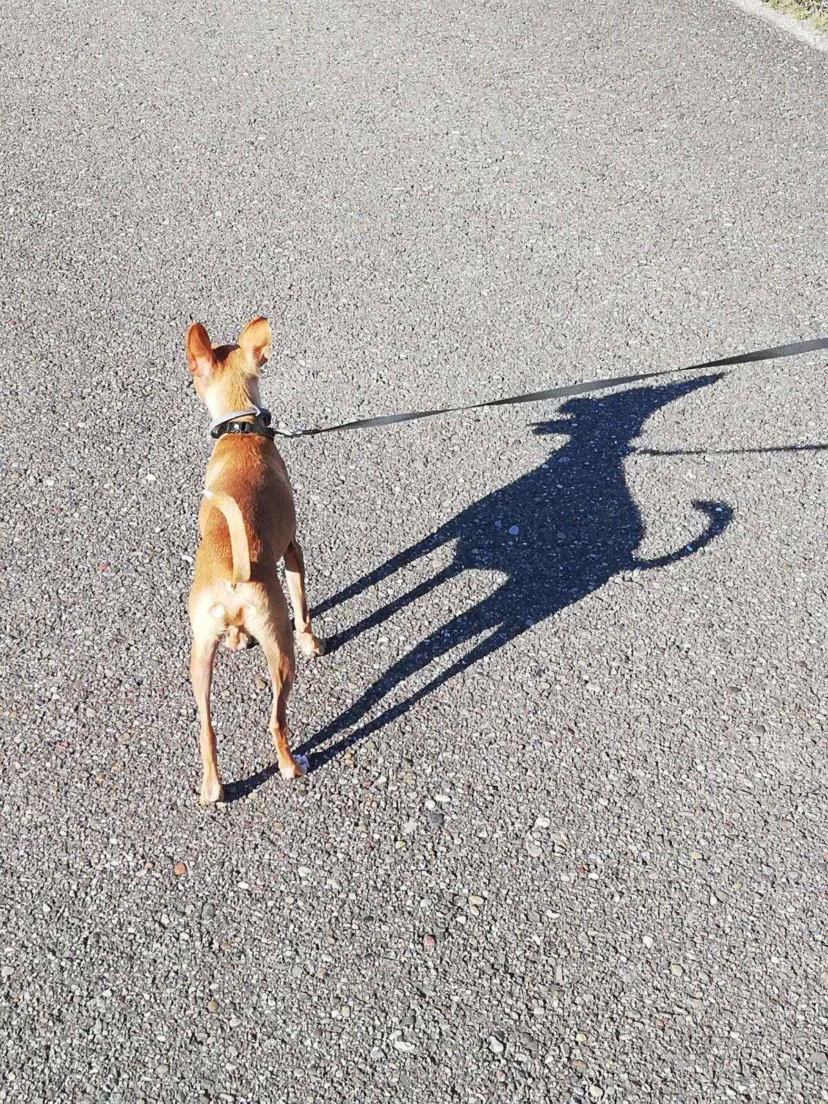 Permalink auf:Brunos kleine Welt